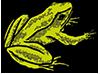Sagra delle rane